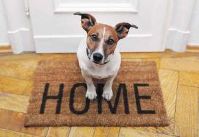 Les escrocs sont imaginatifs pour soutirer de l'argent aux propriétaires de chiens.