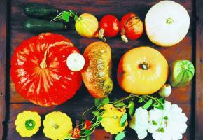 LÉGUMES D'HIVER • Elles ne font pas seulement le bonheur des enfants pour Halloween… Les cucurbitacées constituent également un aliment précieux et délicieux.