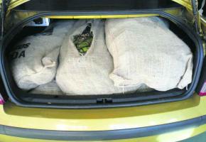 Les gardes-frontière ont saisi cet été 189 kilos de khat dans une voiture.