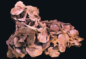 On trouve la rose des sables principalement dans le désert.