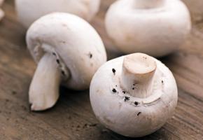 Bouchées de champignons  de Paris à la féra