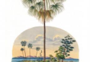 L'exposition permet de rappeler l'importance de la forêt amazonienne. DR