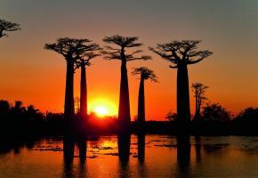 La fameuse allée des baobabs, l'un des sites les plus photographiés de Madagascar, se trouve à moins de 20 kilomètres de la cité balnéaire de Morondava, côté canal du Mozambique. ONTM