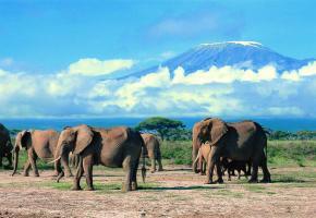 Le parc d'Amboseli avec le Kilimandjaro en arrière-plan.