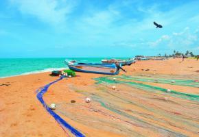 Les plages sauvages des environs de Jaffna permettent de se prélasser au soleil en admirant la beauté de l'océan Indien. DR