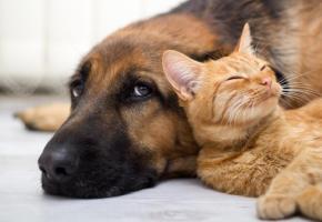 L'association genevoise recueille environ 300 chiens et 600 chats chaque année dans son refuge de Bernex. 123RF/PETAR DOJKIC