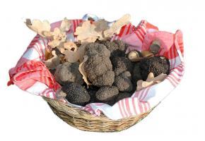 Le climat et le sol suisses conviennent très bien à la culture de la truffe. PéPINIèRE DE GENOLIER