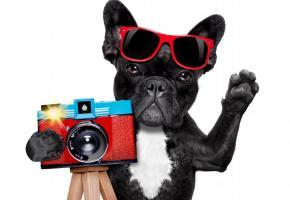 Un concours photo qui a du chien! 123RF/DAMEDEESO