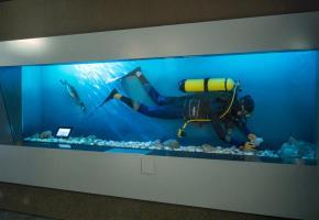 Les plongeurs sont essentiels aux recherches scientifiques dans le lac Léman.