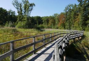 Une passerelle en bois permet de plonger au sein des milieux naturels liés à l'étang des Douves. GENÈVE RANDO