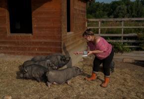Isabelle Guignard s'occupe des cochons vietnamiens de La Gavotte depuis dix ans. CHRISTIAN BONZON