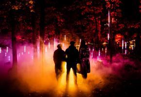 Une forêt enchantée qui plonge le visiteur dans un monde imaginaire.