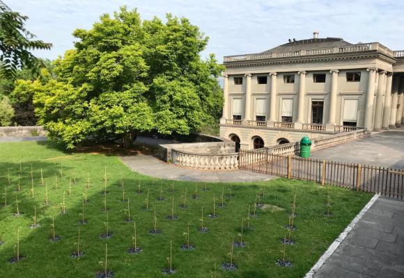 La vigne municipale a été plantée, le 22 mai dernier, à côté du Palais Eynard. FRANCIS HALLER