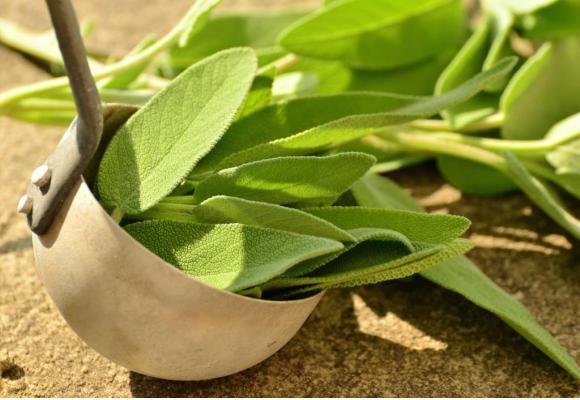 La sauge est réputée pour ses vertus antiseptiques et antibactériennes. PXHERE