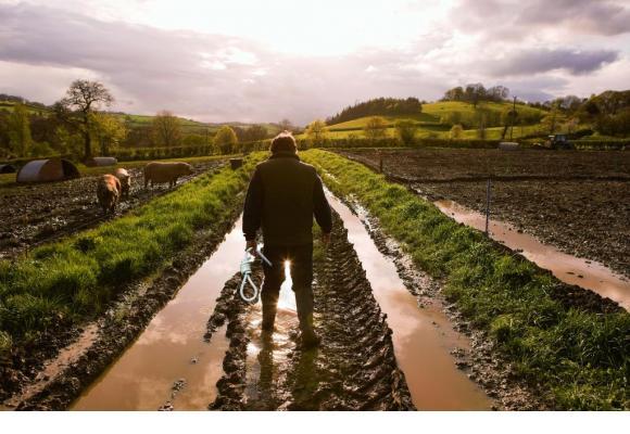 Soutenir les paysans genevois? C'est la mission d'une ligne téléphonique.  PHOTOMONTAGE GETTY IMAGES/GHI