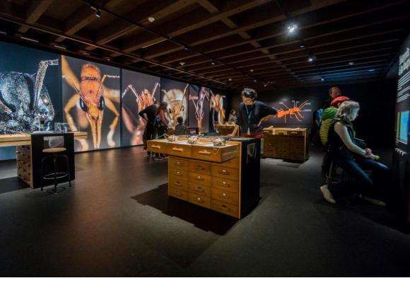 Le plus grand musée d'histoire naturelle de Suisse. PH. WAGNEUR/MUSéUM D'HISTOIRE NATURELLE