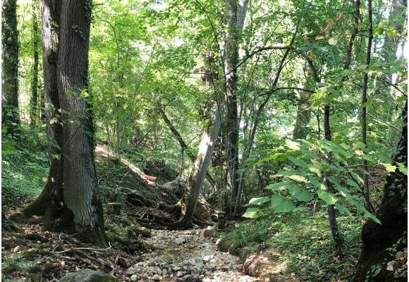 La Drize à Troinex est complètement asséchée. Elle était la rivière la plus productive  pour la pêche à la truite. DR