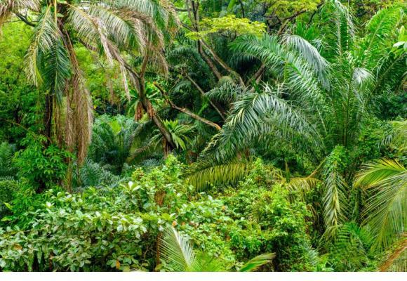 La jungle, thème d'une cuvée nouvelle prometteuse. 123RF/NEJRON