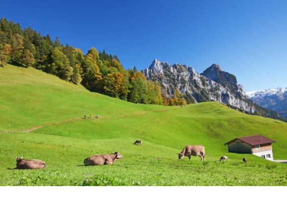 Les cantons de montagne auront sans doute la c0te cette année. 123RF/FEDOR SELIVANOV