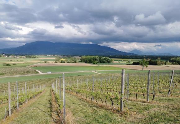La vue splendide sur les ceps et les Voirons. Sans les nuages, le Mont-Blanc est visible. MP