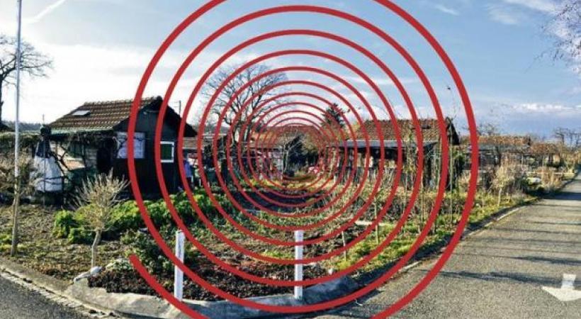 Jardins familiaux vandalisés: motion déposée