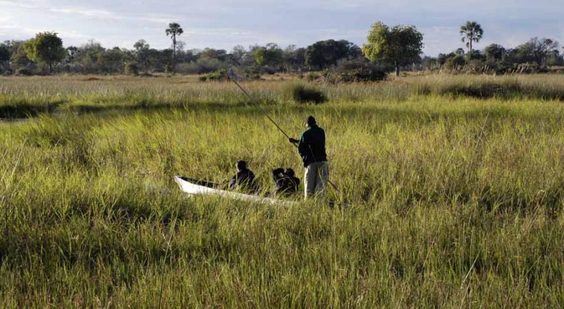 Les frêles pirogues appelées mokoro glissent entre les herbes hautes.