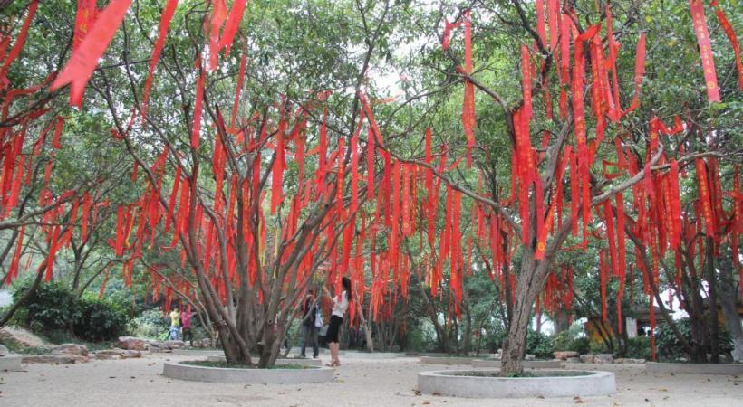 Arbre v ux au jardin botanique ghi le journal ind pendant des genevois - L arbre a souhait ...