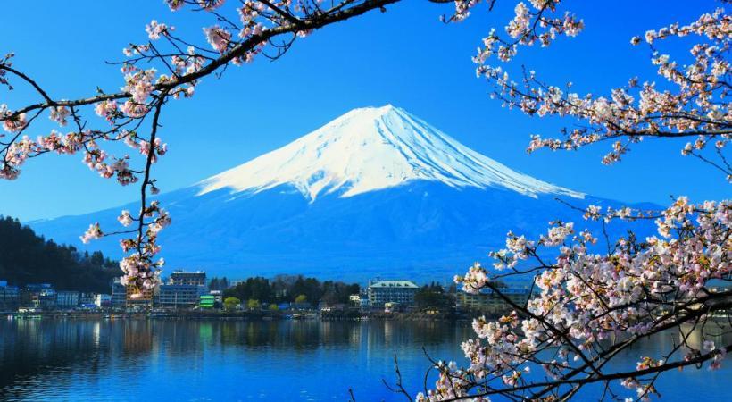 La culture des paysages ghi le journal ind pendant des genevois - Greffe du cerisier au printemps ...