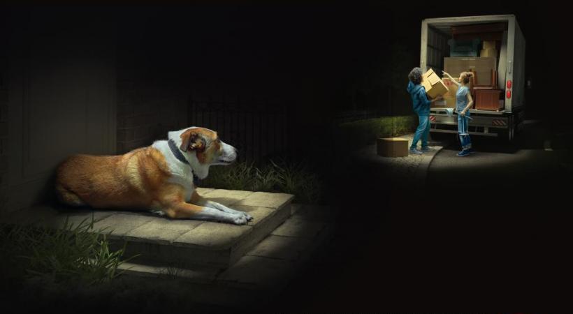 Une des photos de la nouvelle campagne de la SPA. DR