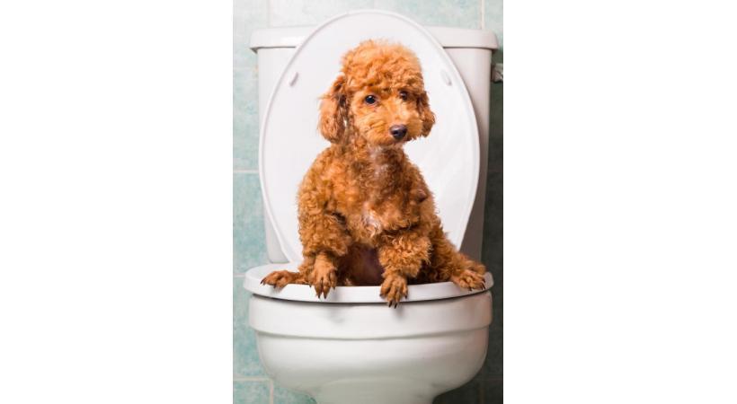 La solution? Des WC sur la voie publique pour les petits pipis de chiens... GETTY IMAGES/THAM KC