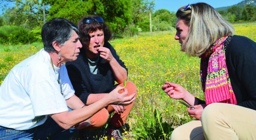Une balade botanique comestible  près de Lauris. A. BOSSU