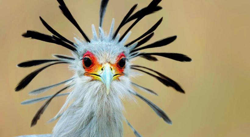 Vol de grues royales. Y. THONNERIEUX  Un maki catta,  de la famille  des lémuriens. JEZZ BENNETH Dans la volière des loris. Y. THONNERIEUX