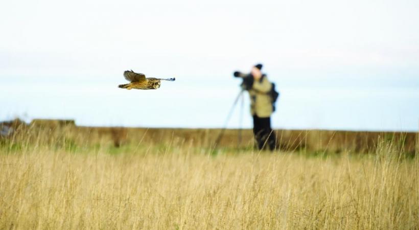 L'ornithologie suscite un intérêt toujours plus grand en Suisse romande. PIXABAY