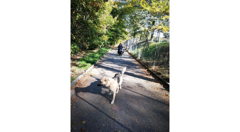 La promenade des Orpailleurs est partagée entre les deux-roues et les chiens sans laisse. DR