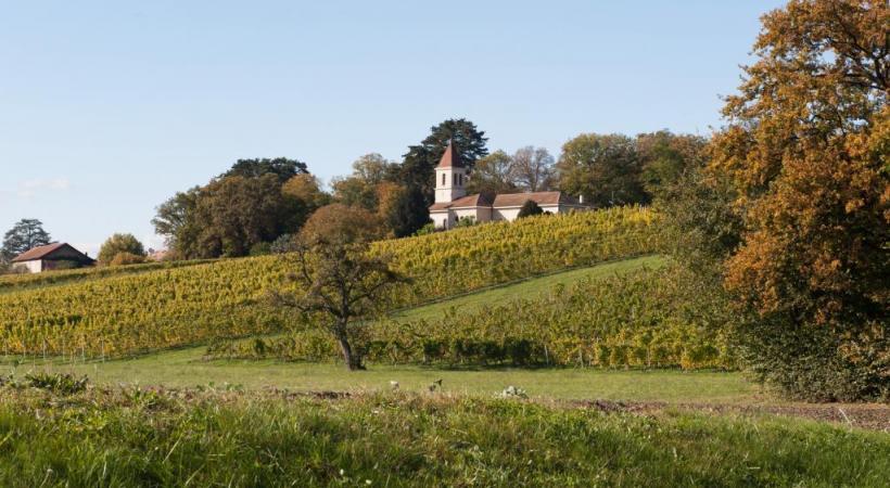 Un itinéraire à la découverte des vignobles de la rive gauche du lac (ici Choulex  et son église). SUISSEMOBILE