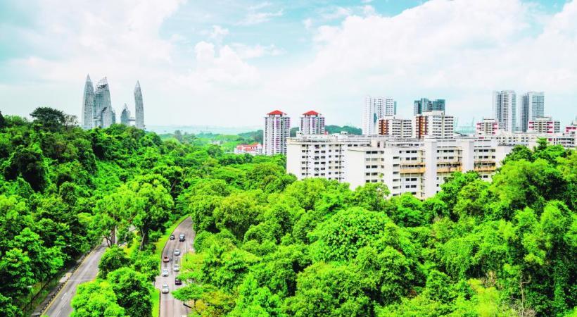 La végétation s'empare des plus hauts buildings.