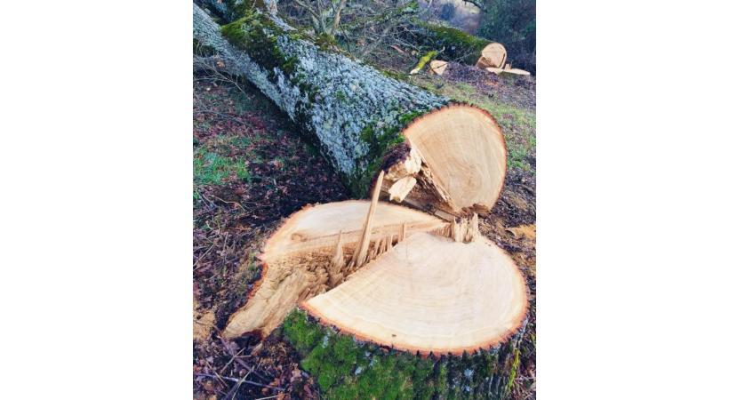 Selon le site PilierPublic, les avis ou dérogations pour abatage d'arbres ont augmenté de 16% entre septembre 2019 et septembre 2020. DR